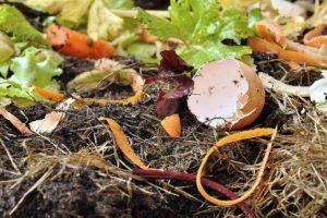 Újra komposztálási program Pesterzsébeten